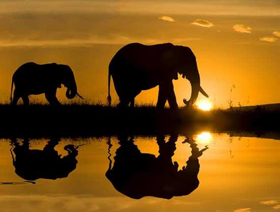 fotografías de África
