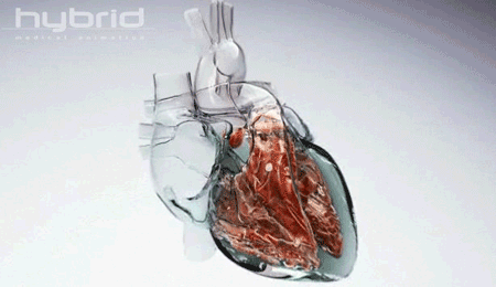 corazon transparente