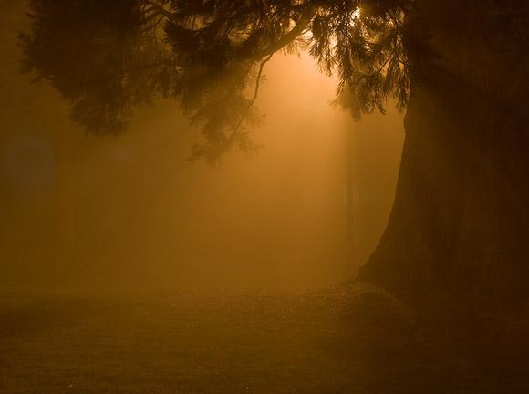 El mundo de noche