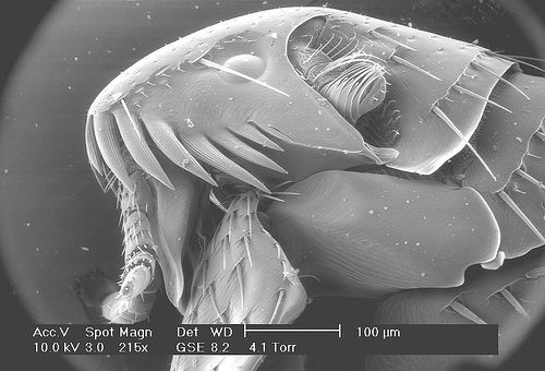 microscopio electronico imagen