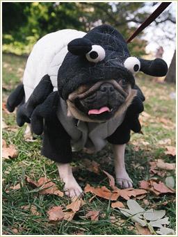 perros tontos