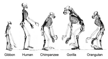 teoria evolucion