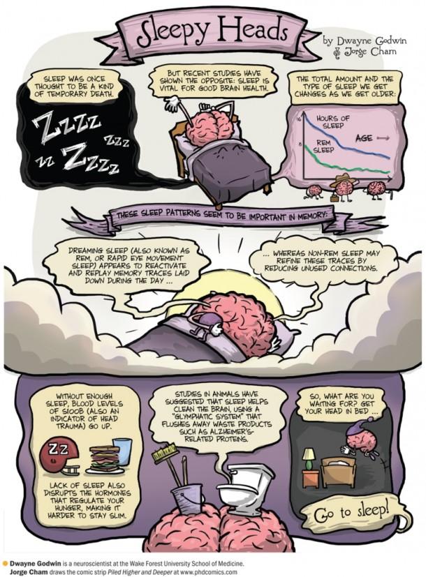 dormir repara el cerebro