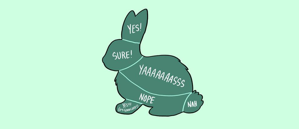 acariciar conejo