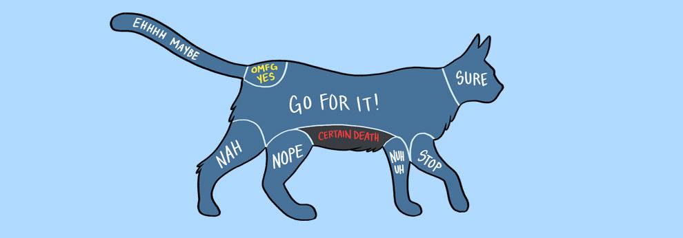 acariciar gato