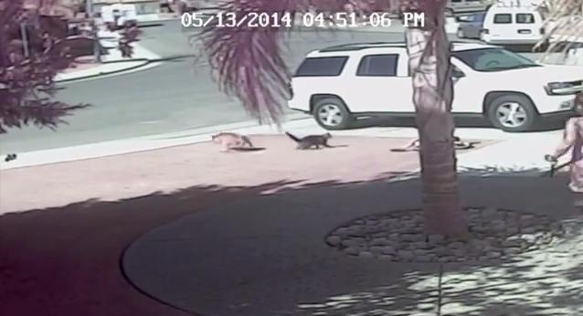 gato salva nino perro
