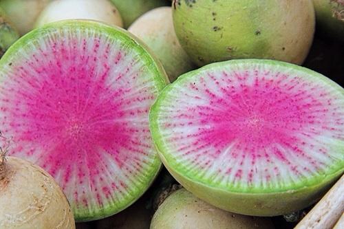 melon radish