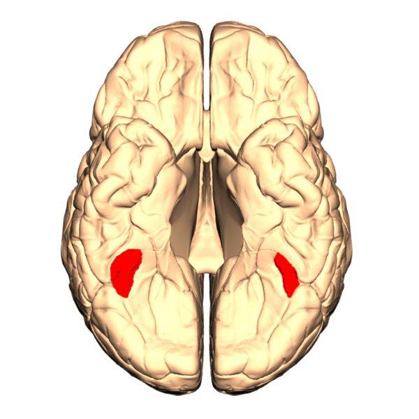 area del cerebro reconocer caras
