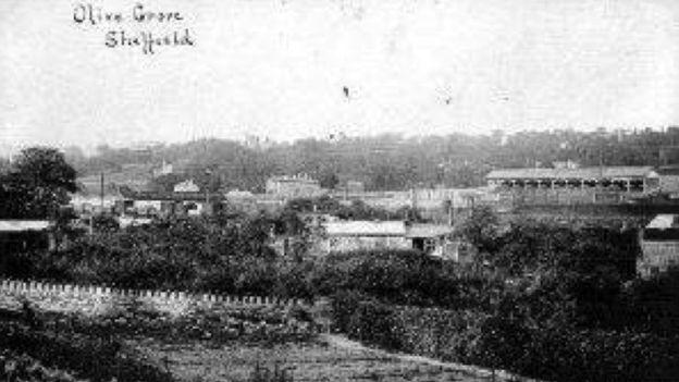 El campo Olive Grove en 1850