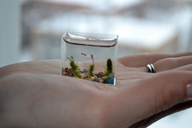El acuario con pez m s peque o del mundo refugio antia reo for Acuarios pequenos